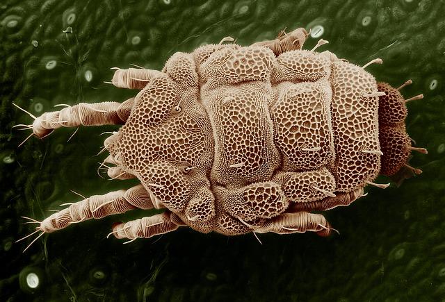 Jak chronić alergika przed roztoczami?