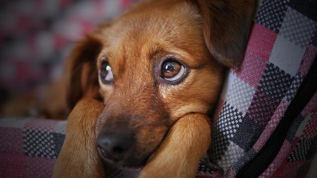Przeciwdziałanie alergii na psa