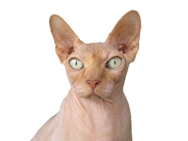 Kot dla alergika